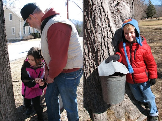 learning to tap maple trees for syrup